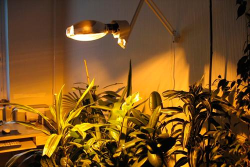 Jaka Lampa Fluorescencyjna Jest Najlepsza Dla Roślin